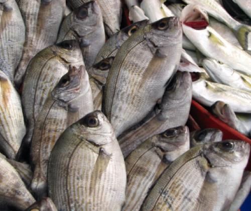 Betrug bei Honig und Fischen – Ergebnisse des EU-Kontrollplans 2015