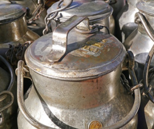 Schützt Milch vor Campylobacter-Infektionen?