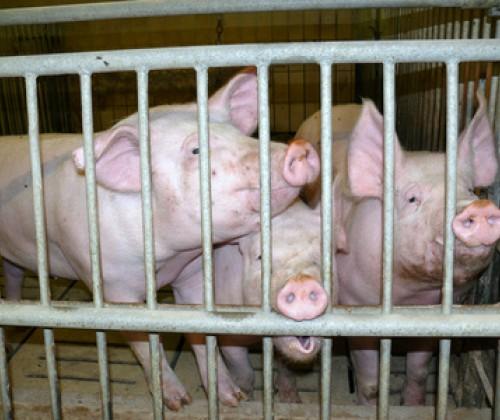 "Antibiotikaresistenz: ""Reserveantibiotikum"" Colistin betroffen!"
