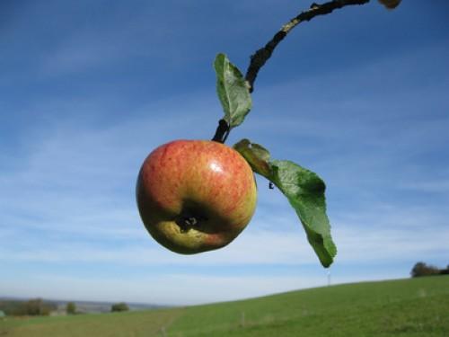 Danone: Apfel drauf, aber nicht drin