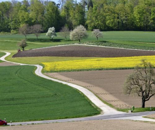 GV-Anbaufläche weltweit leicht zurückgegangen