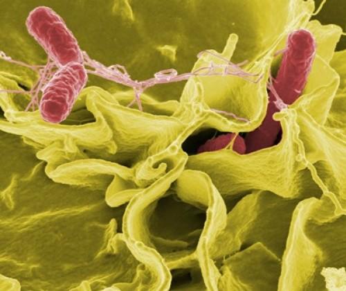 Salmonellenfälle beim Menschen: Bewertung der aktuellen Reduktionsziele der EU