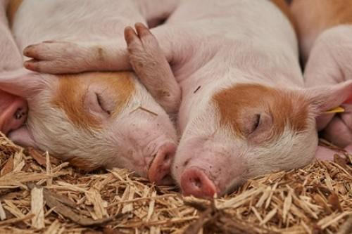 EU-Referenzzentrum für Tierschutz eingerichtet