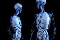 Fusobakterien und Ernährung: Beeinflussung des Darmkrebsrisikos?