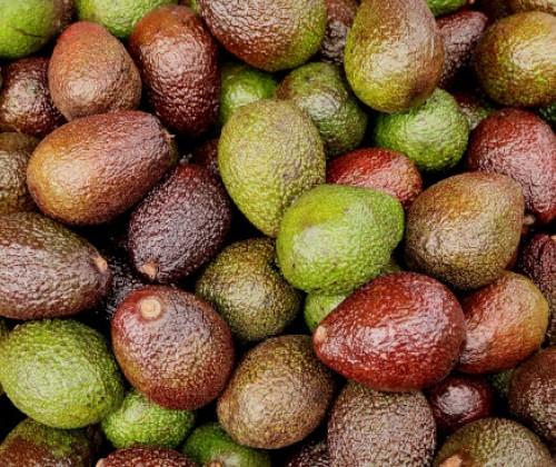 Untersuchung von Avocados