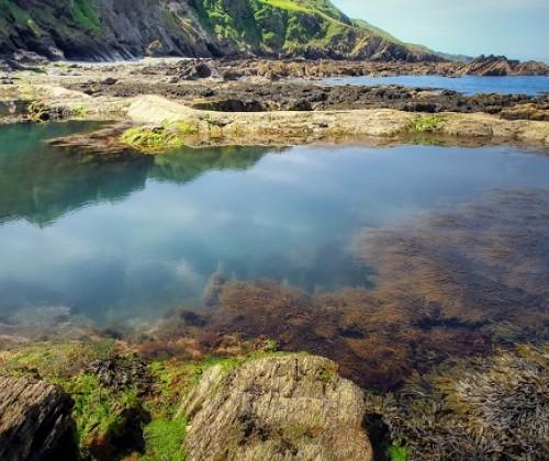 Meeresalgen als nachhaltige Rohstoffquelle