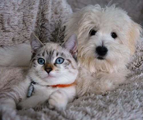 Hautdiphtherie: Mehr Infektionen durch Haustiere?