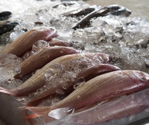 Unkorrekte Kennzeichnung bei Fischen und Meeresfrüchten
