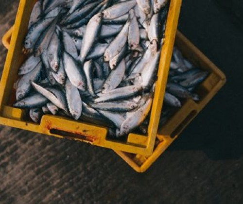 Mikroplastik in Fischereierzeugnissen
