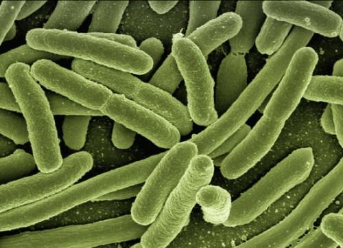 Starker Anstieg von Infektionen mit E.coli in Europa