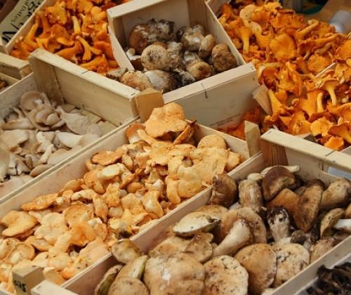 Untersuchung von Pilzen