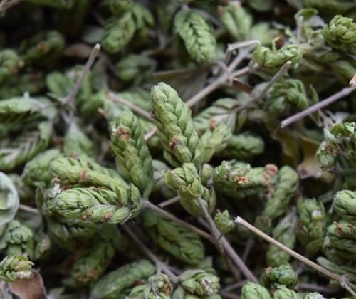 Pflanzengifte in Küchenkräutern