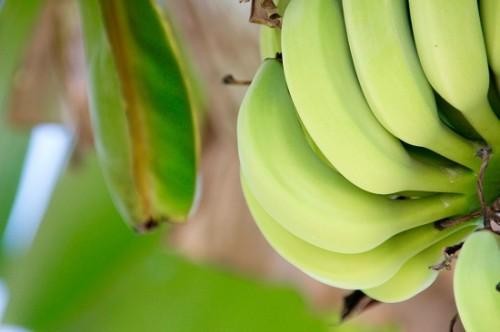 Pestizide in Bio-Bananen
